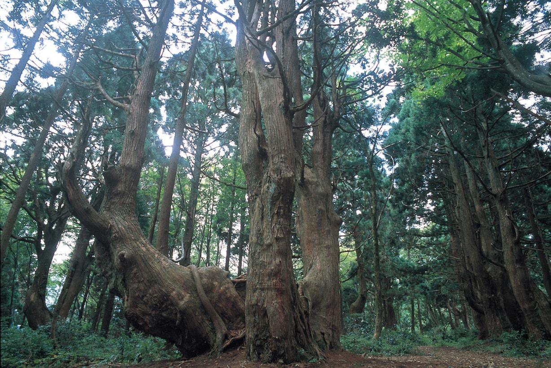 山形県戸沢村の幻想の森