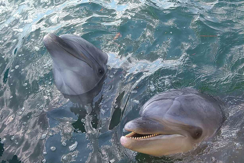 イルカ2匹