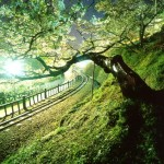 国立自然公園