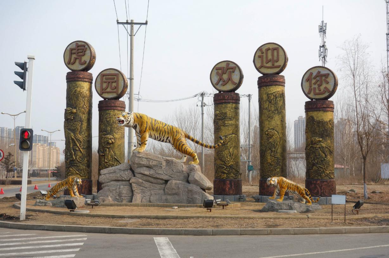 緊急寄稿! トラトラトラ!本場・ハルビンでシベリア虎を見学 ~前編