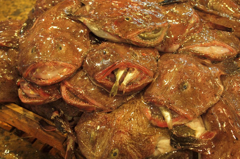 釜山プチ奇食旅行記 前編~ヌタウナギの炒め物 ゴムの様なホルモンの様なゴム